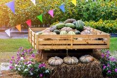 Esposizione del mucchio delle angurie e delle zucche sulla scatola di legno e sulla balla di fieno Fotografia Stock