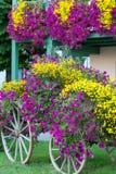 Esposizione del vagone del fiore di caduta Fotografia Stock Libera da Diritti