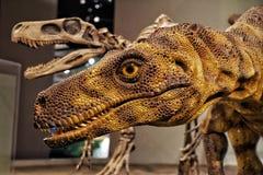 Esposizione del Velociraptor del dinosauro nel museo di The Field Fotografia Stock Libera da Diritti