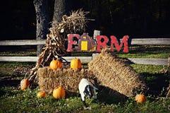 Esposizione dell'azienda agricola di caduta Immagine Stock Libera da Diritti