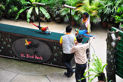 Esposizione dell'uccello Fotografia Stock