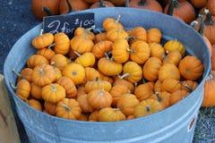 Esposizione della toppa della zucca - piccole zucche arancio Fotografie Stock
