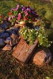 Esposizione delle petunie in un mucchio della roccia immagine stock libera da diritti