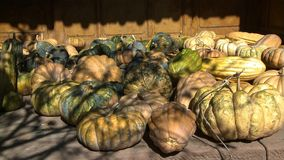 Esposizione delle zucche nell'ambiente della casa dell'agricoltore in campagna Cina immagine stock libera da diritti