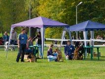 Esposizione di cane Fotografie Stock Libere da Diritti