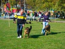 Esposizione di cane Immagini Stock