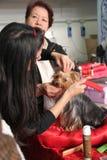 Esposizione di cane internazionale Fotografie Stock Libere da Diritti