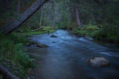 Esposizione di crepuscolo della foresta del fiume Fotografia Stock