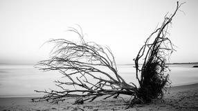 Esposizione lunga di Stradbroke dell'isola dell'albero del nord dell'Australia Immagini Stock Libere da Diritti
