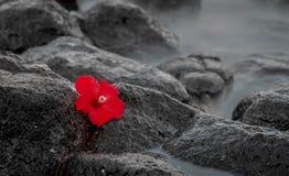 Esposizione lunga rossa di Hiacynth Fotografie Stock Libere da Diritti