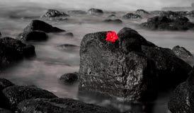 Esposizione lunga rossa di Hiacynth Fotografia Stock Libera da Diritti