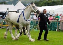 Esposizione pesante 2011 di Cartmel del cavallo fotografia stock