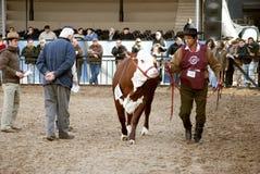 Esposizione rurale del Th dell'Argentina 124 Fotografia Stock
