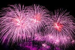Esposizione viola dei fuochi d'artificio Fotografia Stock