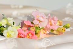 Espray blanco y rosado de los antirrinos Imagenes de archivo