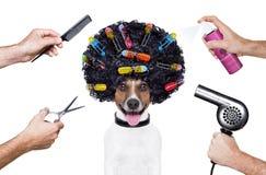 Espray del perro del peine de las tijeras del peluquero fotografía de archivo libre de regalías