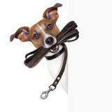 Espray del perro del peine de las tijeras del peluquero Imagen de archivo