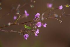 Espray púrpura foto de archivo