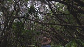 Espreitadelas da mulher através dos arvoredos densos da selva tropical úmida vídeos de arquivo
