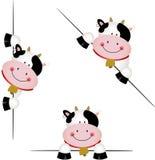 Espreitar bonito da vaca Fotografia de Stock Royalty Free