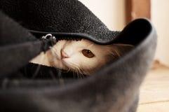 Espreitar do gato Imagem de Stock