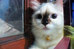 Espressione sveglia del gatto Fotografie Stock Libere da Diritti