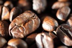 Espressobönor Det extrema slutet sköt upp Makro Royaltyfri Foto