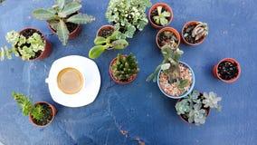 Espressokaffe i den vita koppen bland den mini- kaktuns Royaltyfria Bilder
