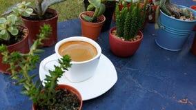 Espressokaffe i den vita koppen bland den mini- kaktuns Royaltyfri Fotografi