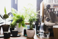 Espressomachine in het binnenland van de koffiewinkel met koppen en groene installaties Stock Fotografie