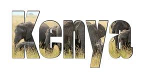 Esprima il Kenya con un gregge degli elefanti africani isolati su bianco Fotografie Stock