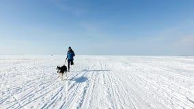 Esprinter en arnés con el perro de trineo en una bahía congelada almacen de video