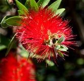 Esprit 19 d'abeille et de fleur Photo stock