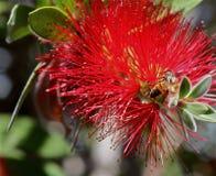 Esprit 33 d'abeille et de fleur Images libres de droits