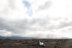 Esprit de l'Islande Photographie stock