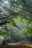 Esprit de la forêt Photo libre de droits