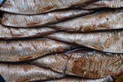 Esprots de Kiel de poissons avec la peau de poissons Image stock