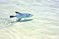 espuma contoy de México del isla de los pescados la onda Fotografía de archivo libre de regalías