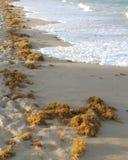 Espuma del mar Imagen de archivo libre de regalías