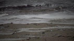 Espuma sucia en el agua y la costa, eutroficación, contaminación del depósito, problema ecológico metrajes