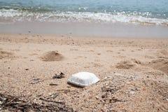 Espumam a caixa e os lixos na praia, na poluição e no ambiente foto de stock