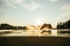 Esquí acuático del hombre en la puesta del sol Foto de archivo libre de regalías
