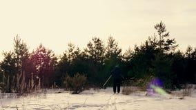 Esquí de fondo en la puesta del sol Un esquí del hombre en el bosque del invierno metrajes