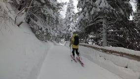 Esquí del hombre abajo de Forest Road Nevadas en un bosque del pino almacen de metraje de vídeo