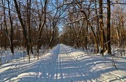 Esquí del país en el bosque del invierno Foto de archivo