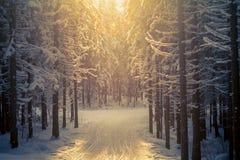 Esquí-pista del bosque Imagen de archivo