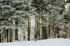 Esquís a campo través del esquiador mientras que se mueve a través del bosque Imagenes de archivo