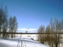Esquís y abedules en el parque Fotos de archivo