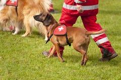 Esquadrão do cão do salvamento Fotos de Stock Royalty Free