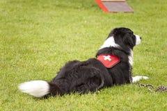 Esquadrão do cão do salvamento Fotografia de Stock